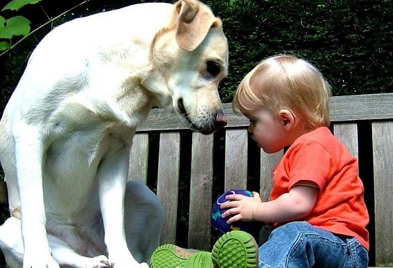 Собака ревновать не умеет...